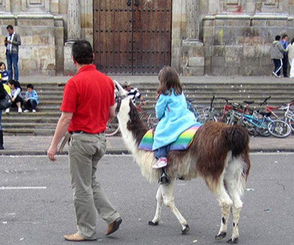 camelos-e-lamas-06